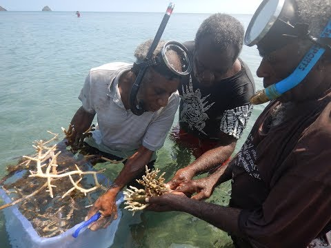 Coral Planting in Southwest Bay, Malekula