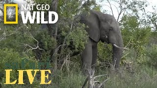 Safari Live - Day 107 Nat Geo Wild