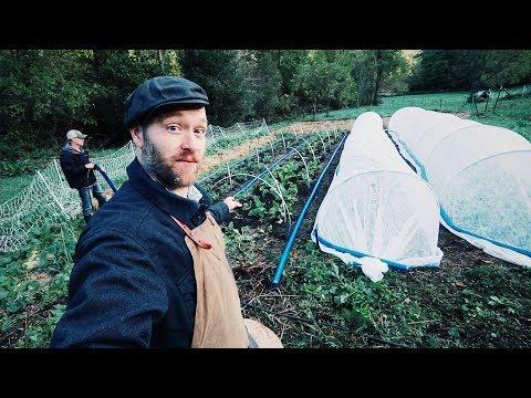 NEW Gardening Trick Helps Me Grow Food IN WINTER