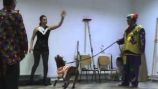 Bimbo Circus la Balaceanca