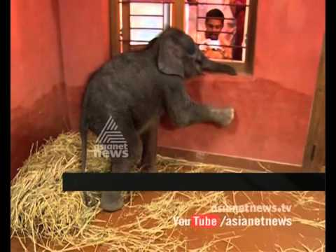 New Member in Konni  Elephant training centre in Pathanamthitta