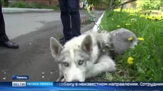 Инвалиду из Тюмени вернули похищенную собаку