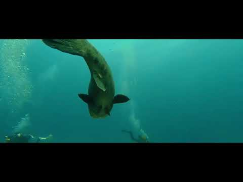 Under Water Explorers promo video