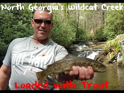 Trout Fishing Georgia's Wildcat Creek
