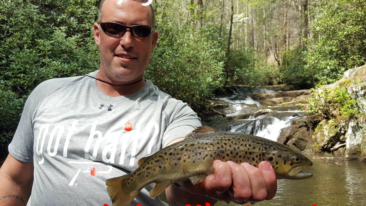 Trout fishing georgia 39 s wildcat creek youtube for Georgia trout fishing