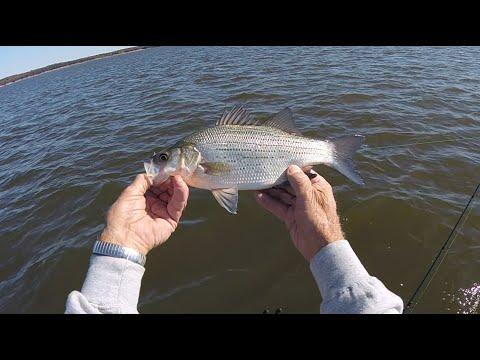 FISH4FUN: OFF SHORE TROLLING ON TRUMAN LAKE