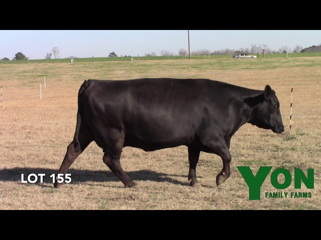 Yon Family Farms Lot 155