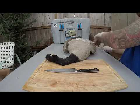 Cleaning Canada Goose