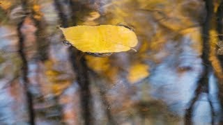 Peaceful Music, Relaxing Music,  Instrumental Music, 'Cozy Autumn' By Tim Janis