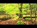 日本で最も美しい村 長野県大鹿村の野ヶ池