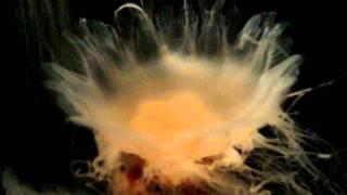 Beautiful Jellyfish motion at Boston Aquarium