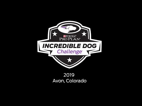 2019 Purina Pro Plan Incredible Dog Challenge in Avon, Colorado