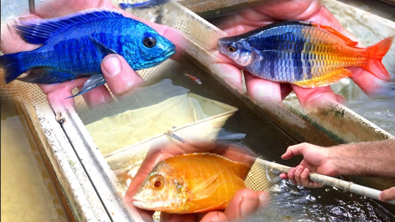 The Biggest Selection Of Fish Somethingfishy Local Fish Store Tour Youtube