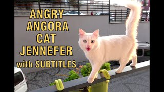 Naughty Angora cat Jennefer