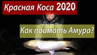 Рыбалка Одесская обл с Красная коса 2020 Ловим больших Амуров и Сомов