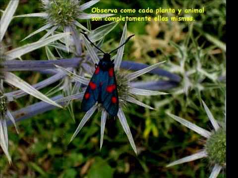 La Naturaleza -Eckhart Tolle - www.inspiracionplanetaria.com