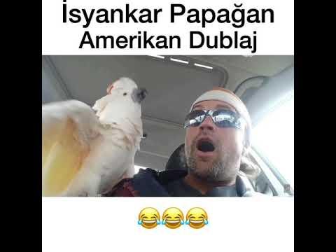 İsyankar Papağan - Amerikan Dublaj