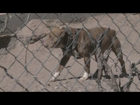 Owners free dog from heavy chain