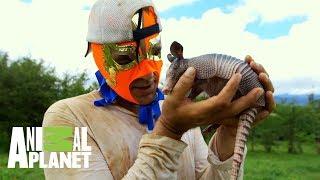 Los mejores momentos de Wild Frank en México   Wild Frank en México   Animal Planet