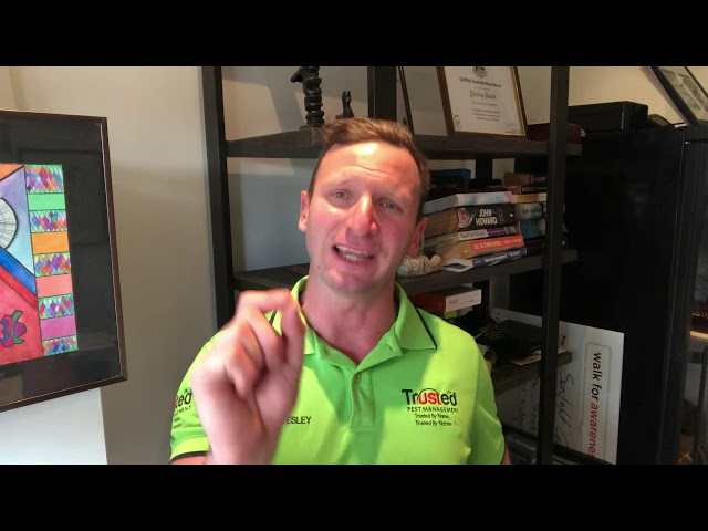 Explanation behind a Termite Free Service Period & a Termite Guarantee