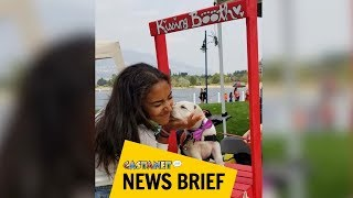 Puppy kissing booth stolen