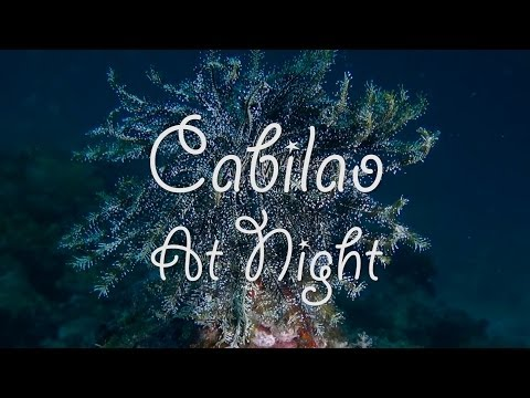 Cabilao At Night
