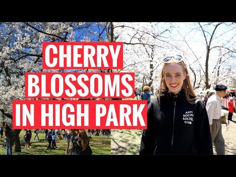 EXPLORING TORONTO | Cherry Blossoms In High Park
