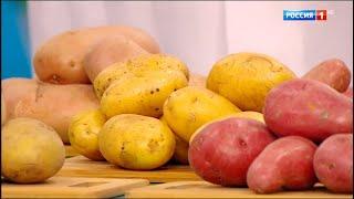 Свойства картофеля. Какой картофель полезнее