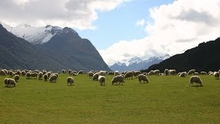 """""""The Lord's My Shepherd"""" -  The 23rd Psalm by Aileen Gilchrist.  (New Zealand Photos)"""