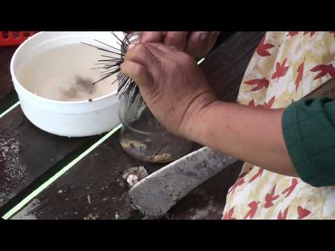 How To Catch and Kill A Sea Urchin (Pt 2)