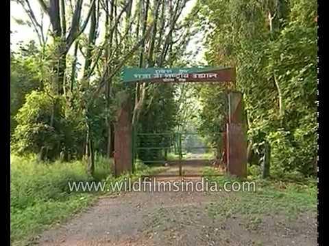 Chilla range wildlife sanctuary near Haridwar in Uttarakhand