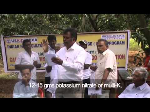 Capacity Building Study on Mango Production - Ananda Naidu Farms, Chittoor, Andhra Pradesh