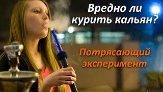 видео Курение кальяна: польза и вред и влияние на организм человека