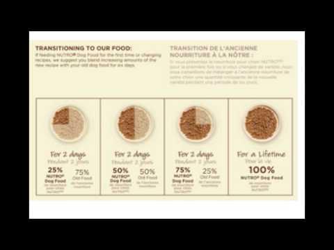 Breed Adult Dog Food Lamb And Rice Recipe