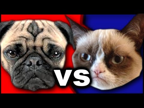 Dogs vs Cats - Which Is Your Favorite Pet?
