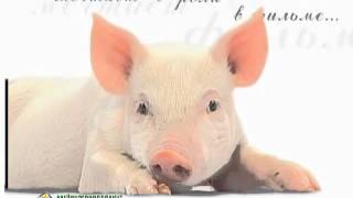 Прибавляйка. Пищевые добавки для животных