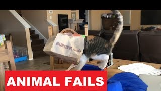 Funniest Animal Fail Compilation December 2018 | Funny Animals