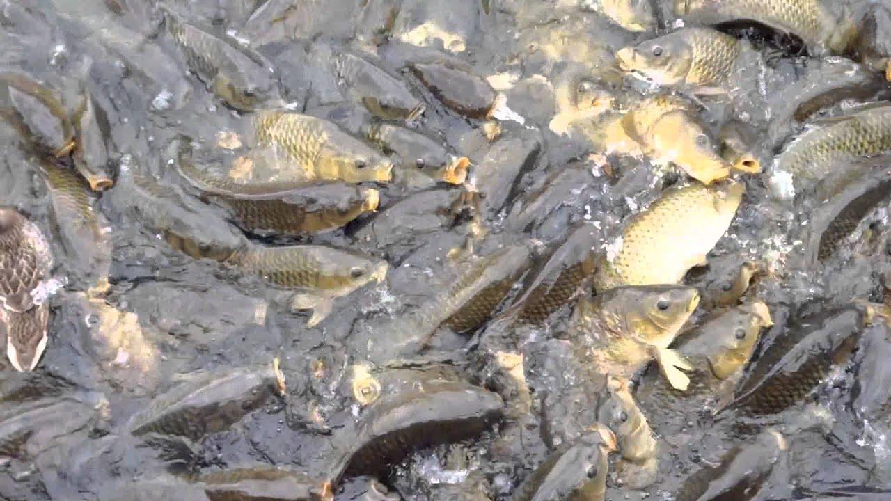 Feeding fish at longview lake in kansas city missouri for Missouri out of state fishing license