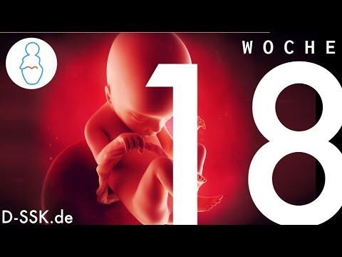18. SSW / 18. Schwangerschaftswoche ✪ D-SSK.de