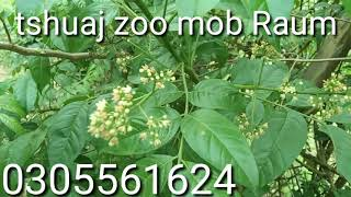 Tshuaj Zoo Mob Raum,zoo Kawg