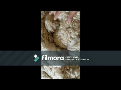 Cleaning alpaca fiber without a tumbler