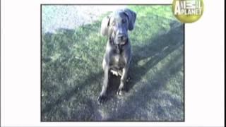 Biggest - Abc Canino - 101 Dogs - EspaÑol