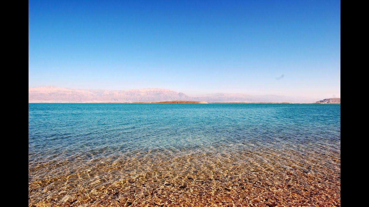 саргассово море фото