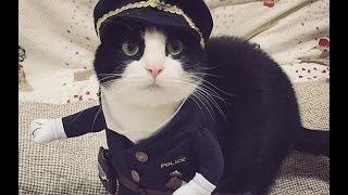 Что подарить своему Коту?