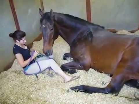 Анальное порно фото с лошадью