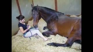 Тёлка с конем - большая любовь