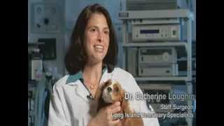 Bridging The Divide, A Short Form Documentary About The New York Veterinary Foundation -