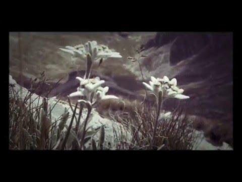 Allegro from Spring, Vivaldi's Four Seasons, lever harp cover