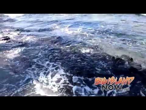 Big Island Activities Guide: Kahalu'u Bay