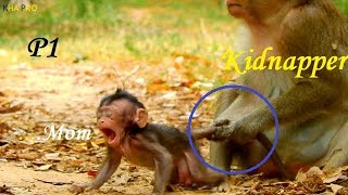Breaking Heart ! Baby monkey was terrified and cried for mom | Pitiful mom felt so sorry